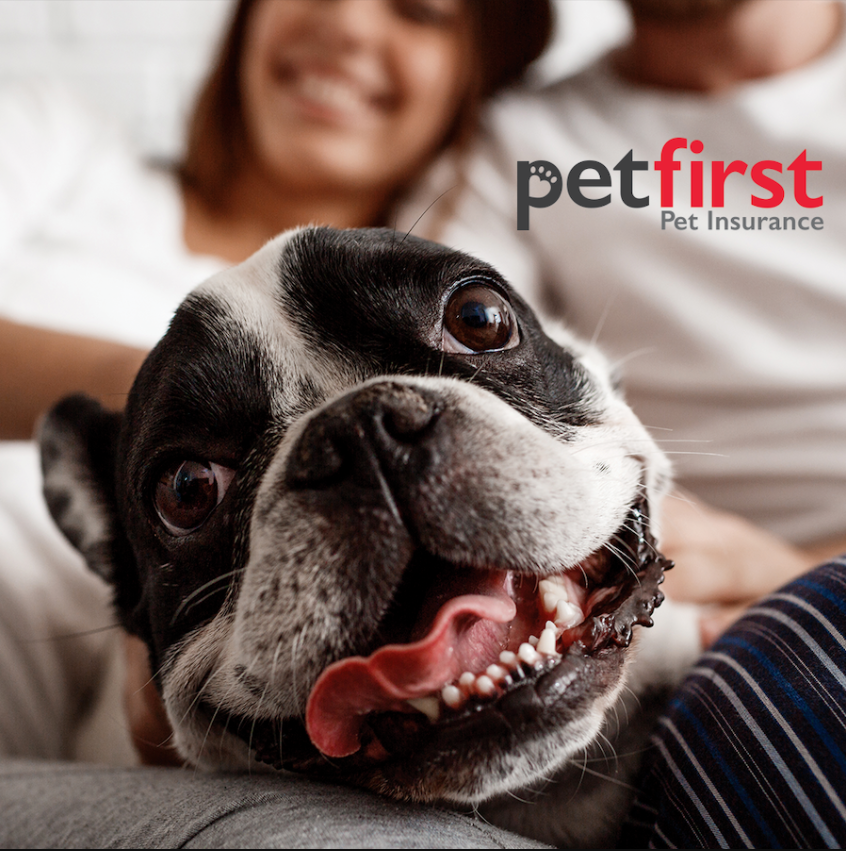 PetFirst FREE Pet Insurance Quotes
